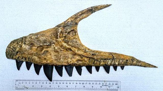 Keşfedilen En Yırtıcı Dinozor Fosilinin Adı Verildi!